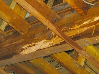 アメリカカンザイシロアリに侵蝕された小屋ウラ
