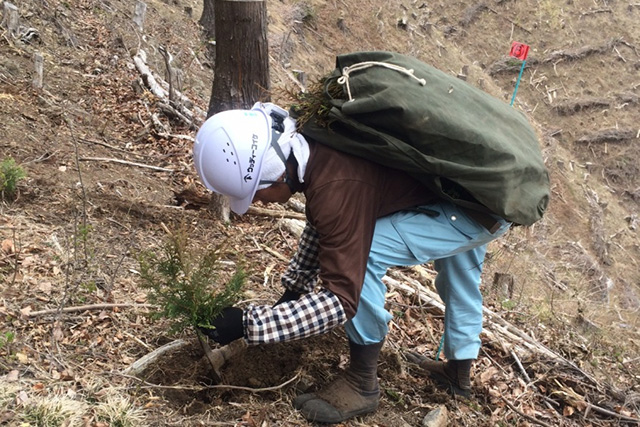森林整備事業・特殊伐採事業